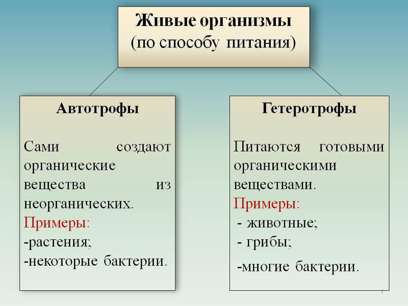 автотроф или гетеротроф