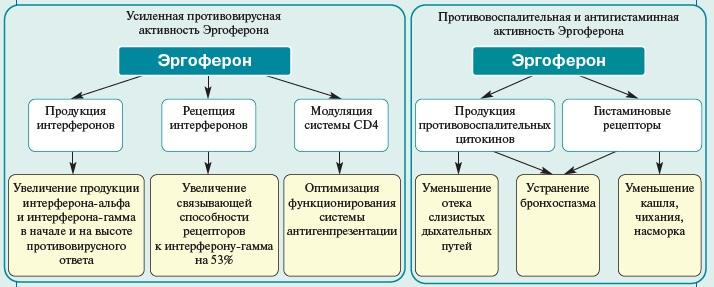 принцип действия эргоферон